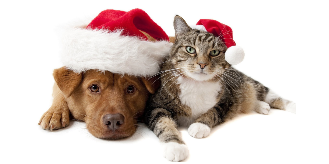 Les animaux ne sont pas des cadeaux à offrir à la légère