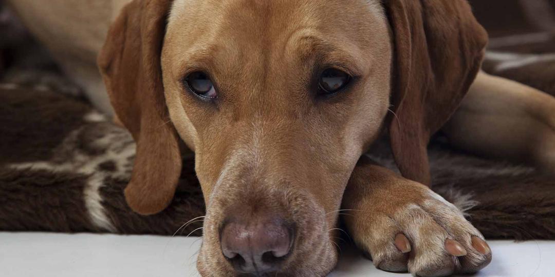 Les animaux et l'épilepsie