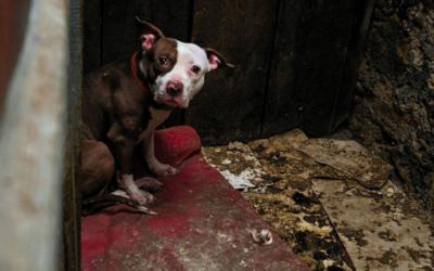 Attention aux trafics de chiens